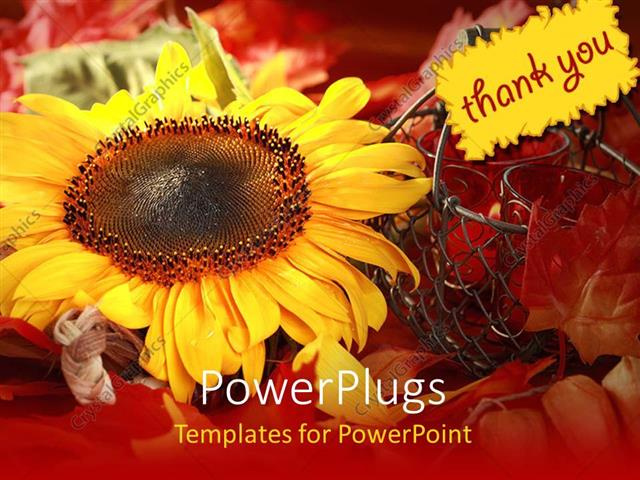 PowerPoint Template Displaying a Sunflower with the Note of Thank you