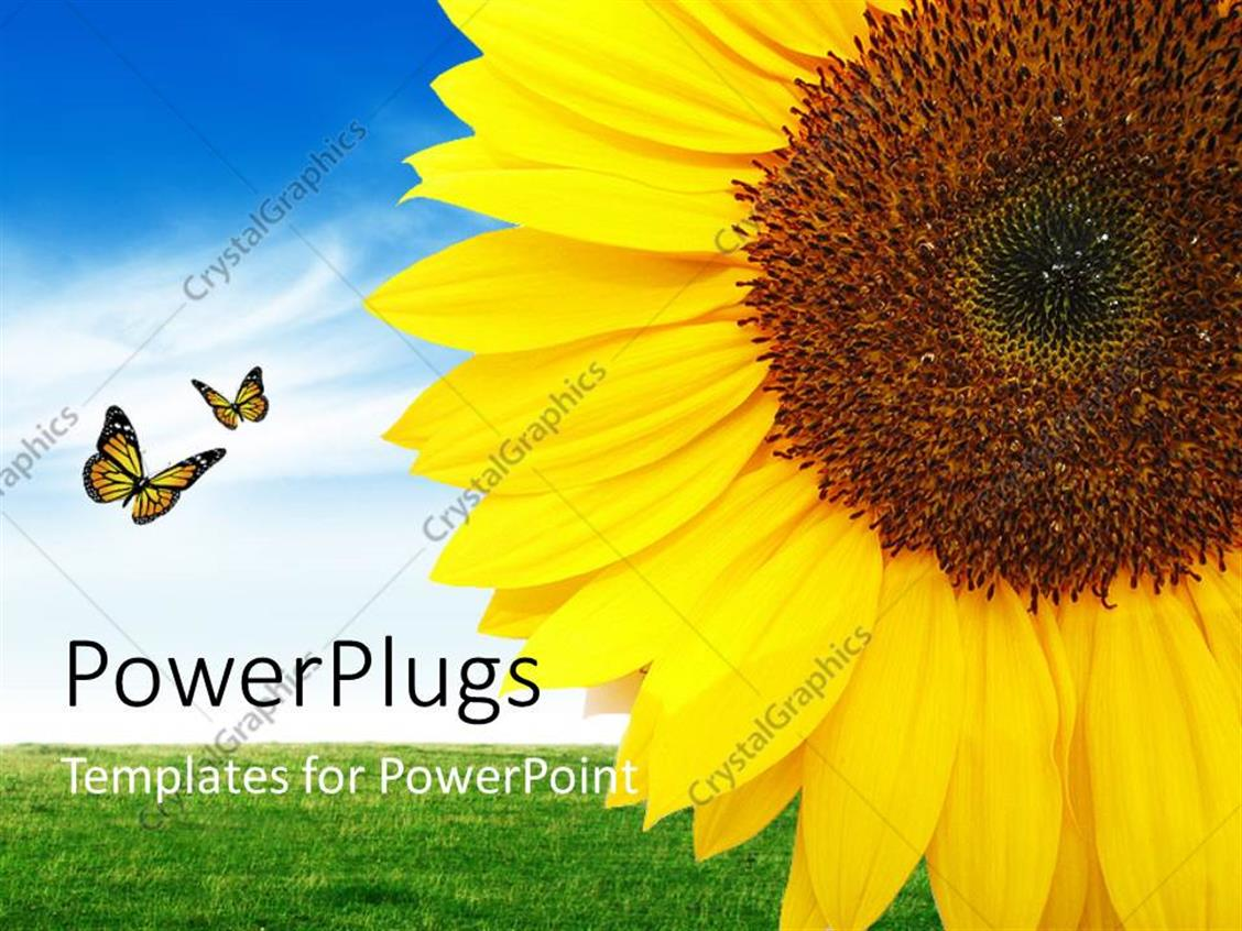 PowerPoint Template Displaying a Sunflower with a Number of Butterflies and Sky in the Background