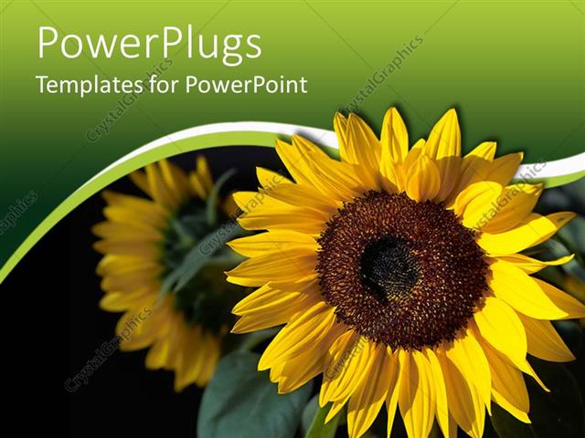 PowerPoint Template Displaying a Sunflower with its Reflection Int he Background