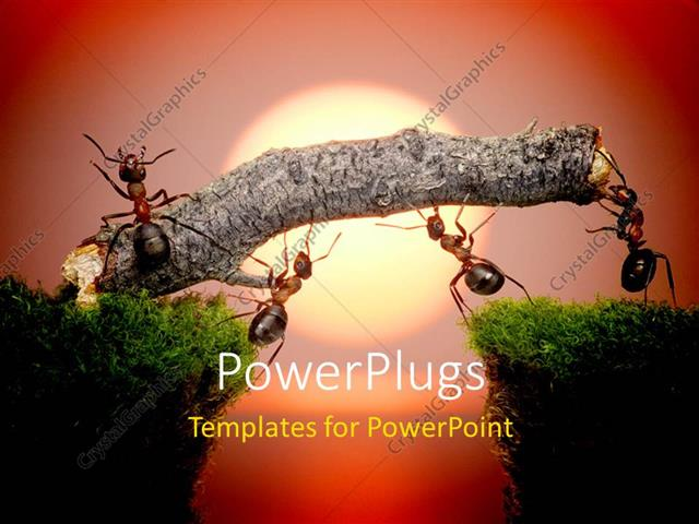 powerpoint template team of ants constructing bridge over water on