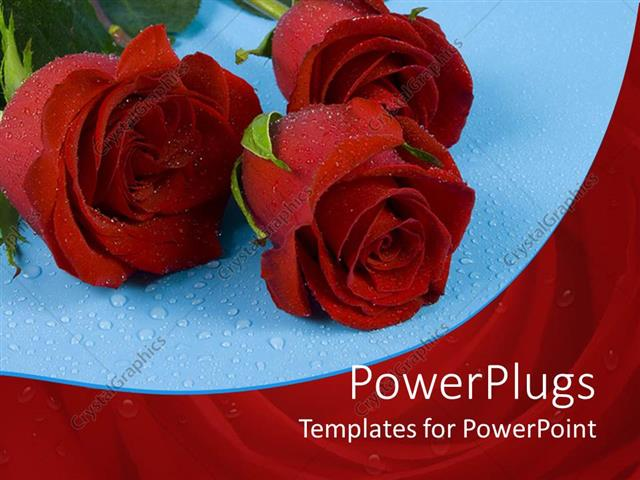 PowerPoint Template Displaying Three Red Roses with Water Rain Drops on Blue Background