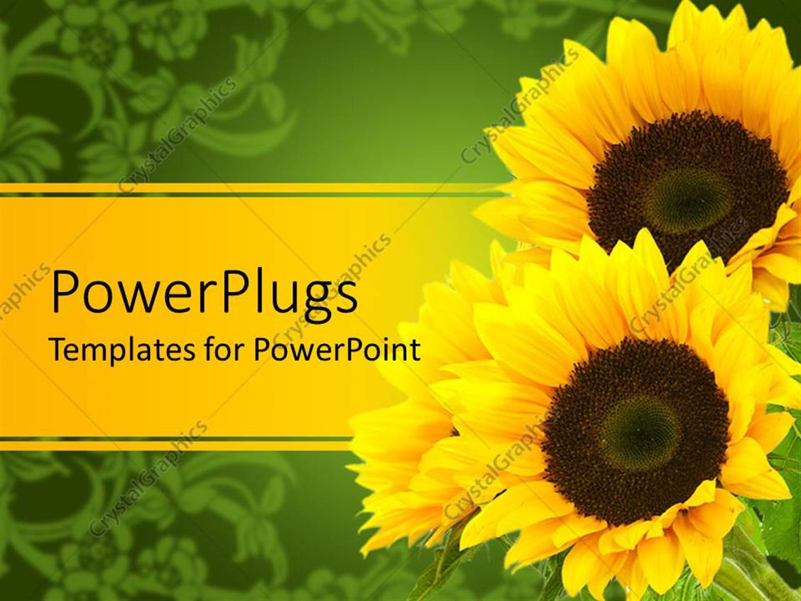 PowerPoint Template Displaying Three Sunflowers Yellow and Green Background