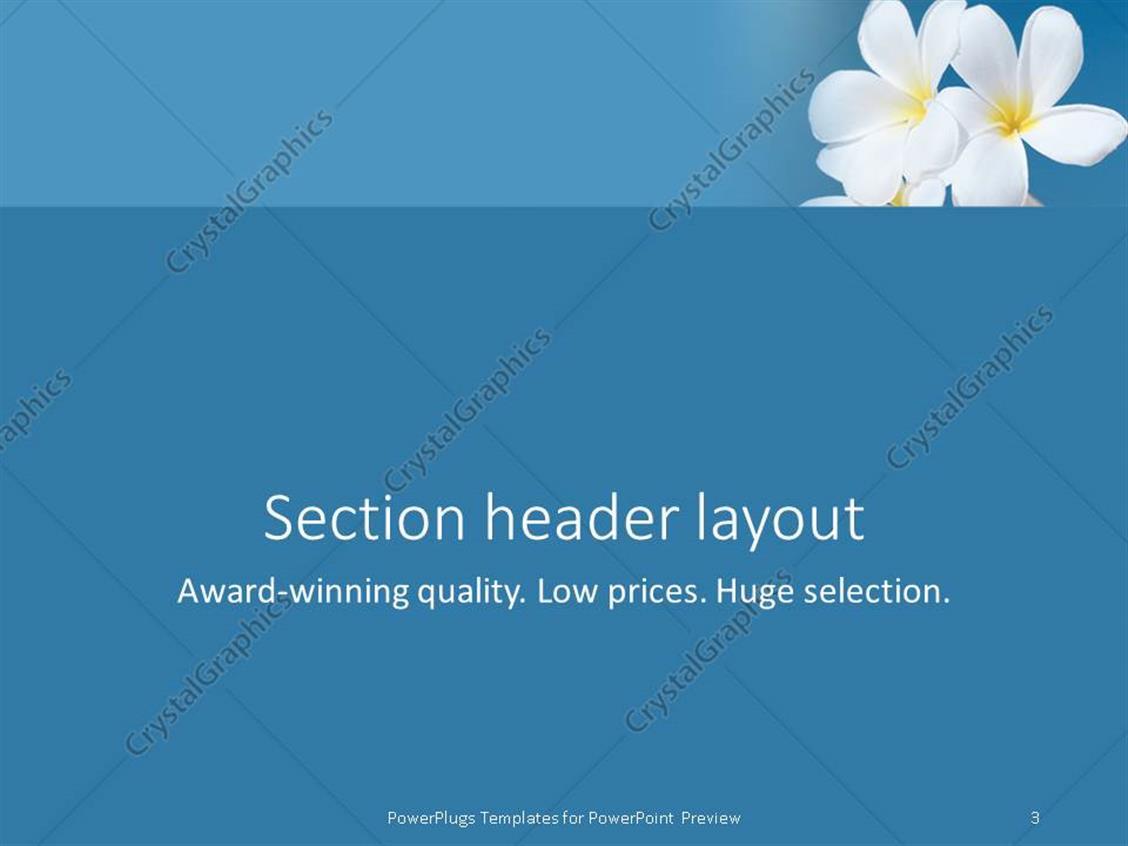 PowerPoint Template: Tropical flower Plumeria alba and seashell ...