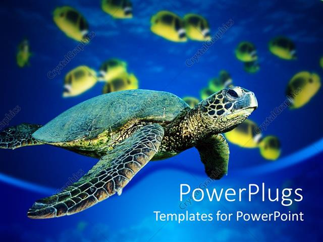 PowerPoint Template Displaying A Turtle Is Swimming In Sea And Fishes Are Also Water