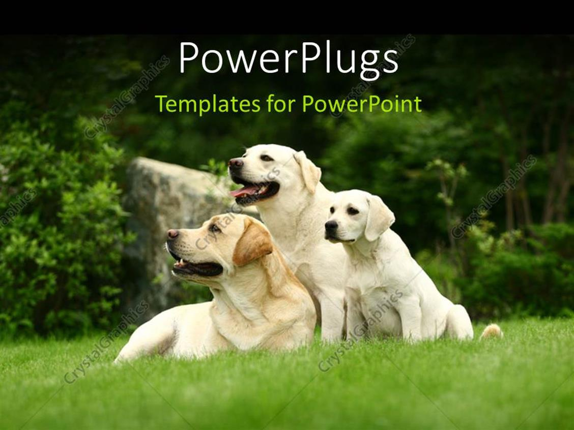 Powerpoint Template Two Big White Dogs And Puppy Sitting In Green
