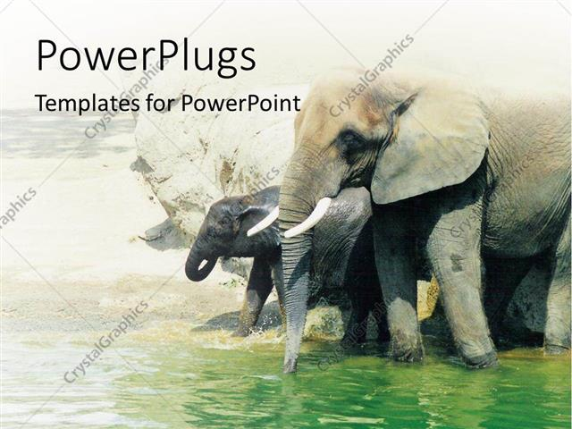 Powerpoint Template Two Elephants Walking In The Water By The Shore