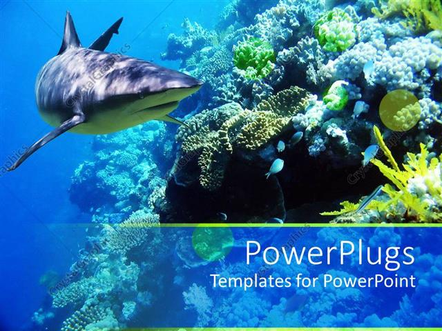 PowerPoint Template: Underwater coral reef ocean with shark and ...