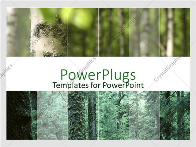 Powerpoint template a view of the forest showing trees and a river powerpoint template displaying a view of the forest showing trees and a river toneelgroepblik Images