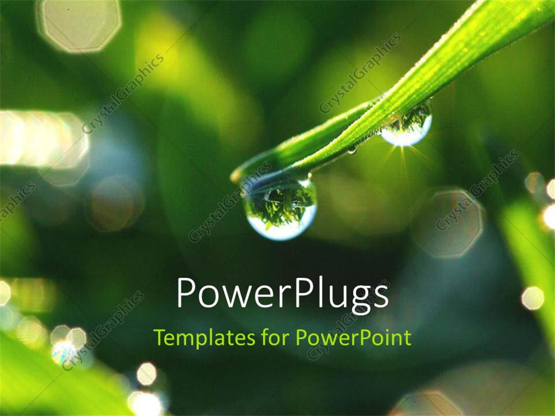 PowerPoint Template Displaying Water Droplet Forming on Leaf Blade from Accumulation of Dew