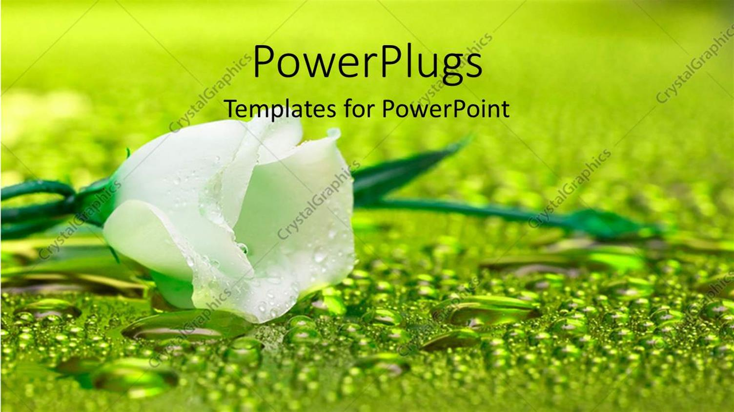 PowerPoint Template Displaying White Flower with Water Droplets