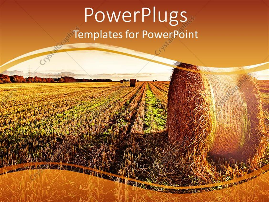 PowerPoint Template: A Wide Wheat Field Showing A Roll