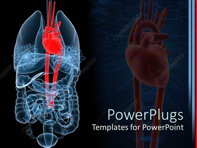 Powerpoint Template X Ray Depiction Of Human Anatomy With Red Heart