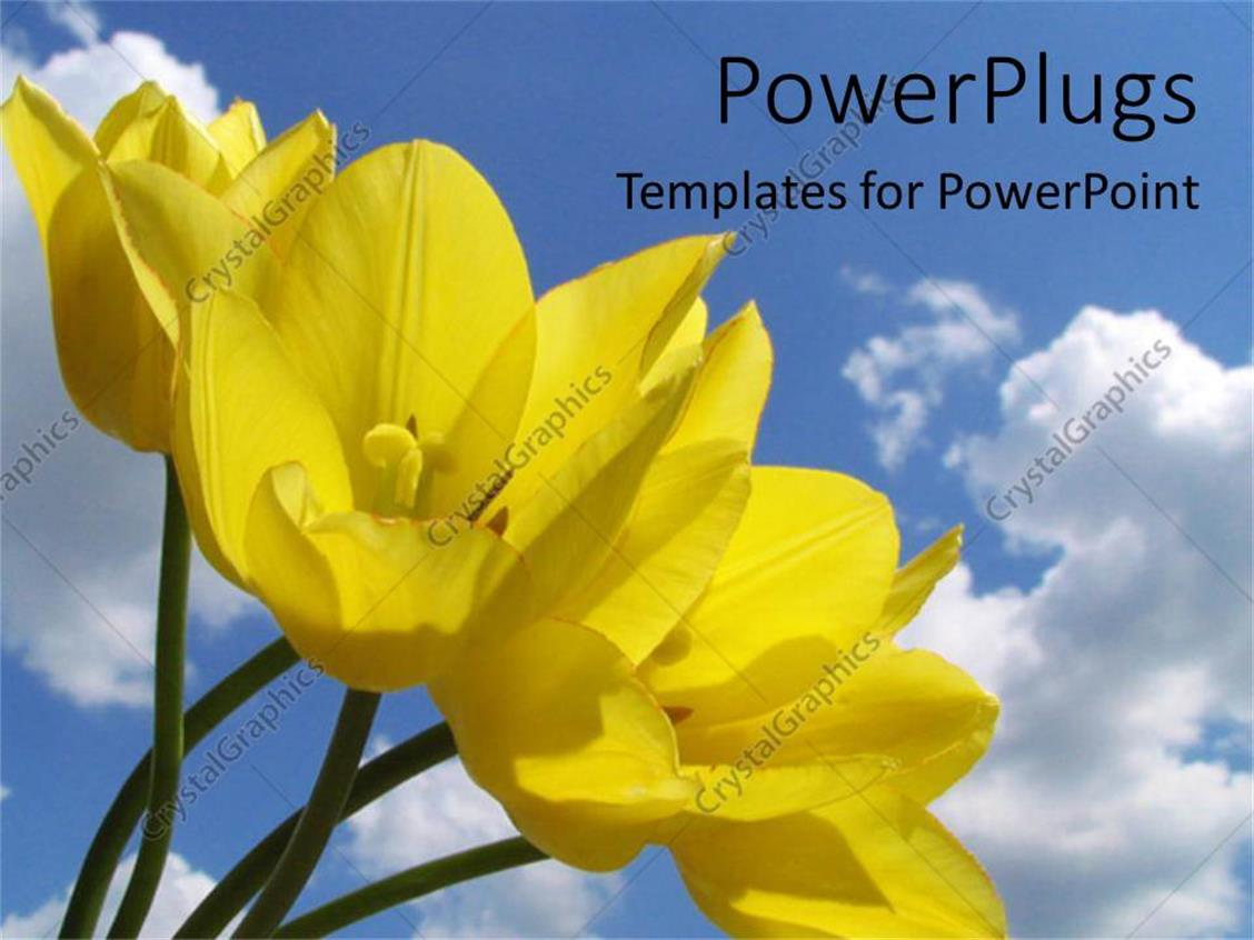 Powerpoint Template Yellow Flowers In Field Blue Skies Spring Time