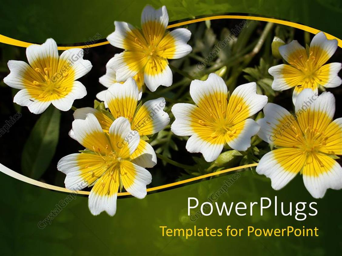 PowerPoint Template Displaying Yellow and White Flowers with Green and Yellow Wave Border, Nature, Spring