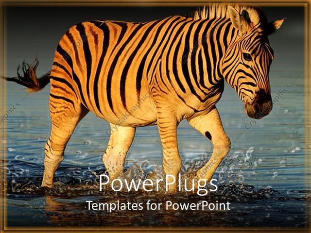 Powerpoint template a zebra crossing a river with place for text in powerpoint template displaying a zebra crossing a river with place for text in front toneelgroepblik Image collections