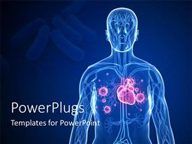PPT theme enhanced with 3D graphics of a transparent human body showing the internal parts