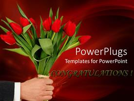 Beautiful PPT theme with adult male hand holding a bunch of red tulip flowers