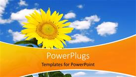 Colorful slide set having beautiful yellow sunflower over blue cloudy sky in background