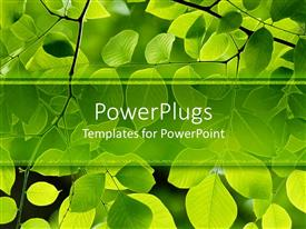 Beautiful PPT theme with american yellow-wood leaves flourishing with sparkling green color
