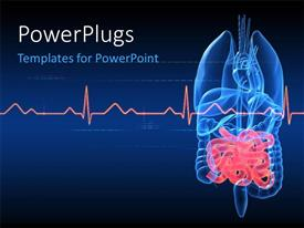 Kidney powerpoint templates ppt themes with kidney backgrounds elegant theme enhanced with anatomy depiction of human organs with highlighted intestines and ecg graph toneelgroepblik Image collections
