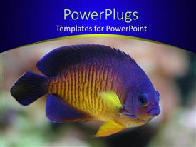 Audience pleasing slide set featuring angel fish in display over colorful background and blue frame