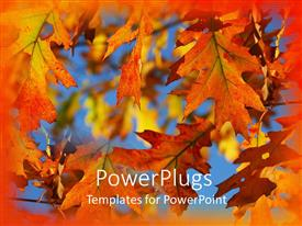 Presentation theme having autumn fall leaves on branches with blue sky and orange border