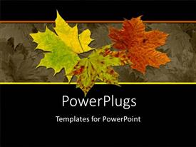 Colorful presentation theme having autumn leaves red yellow green leaves black background