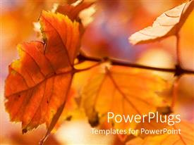 PPT theme with autumn season with red and orange leaves glowing in sunlight