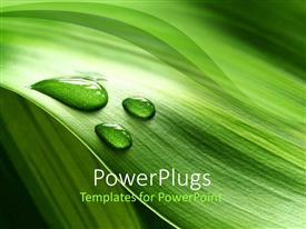 Presentation theme featuring a background of green plant leaf with water drops