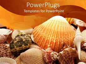Beautiful presentation design with a background of sea shells and starfish of different colors