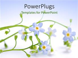 Audience pleasing presentation theme featuring beautiful blue flower laying on white background