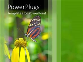 Audience pleasing PPT layouts featuring beautiful butterfly perch on flower in garden to suck nectar