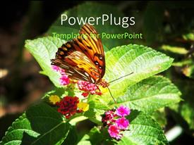 Elegant theme enhanced with beautiful butterfly perch on nectar of flower with grunge background