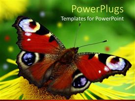PPT layouts featuring beautiful butterfly perches on flower in garden to suck nectar