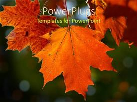 PPT layouts featuring a beautiful depiction  of a number of leaves with blurred background