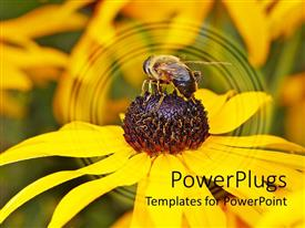 Math quiz bee powerpoint templates w math quiz bee themed backgrounds beautiful slide deck with a beautiful depiction of a sunflower and a bee template size toneelgroepblik Gallery
