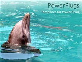 Elegant presentation design enhanced with beautiful dolphin playing in a calm light green pool