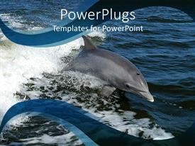 Beautiful presentation theme with beautiful dolphin swimming in calm blue oceans