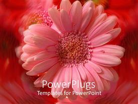 Amazing PPT theme consisting of a beautiful flower with amazing reflection in the background
