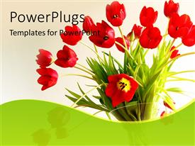Presentation design consisting of beautiful flower bouquet with red tulips in white background
