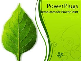 PPT theme enhanced with a beautiful green leaf and the place for text on the other side