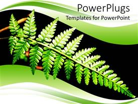 PPT layouts having a beautiful leaf with black background