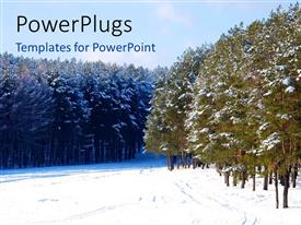 Beautiful slides with beautiful Pine forest covered with snow in winter