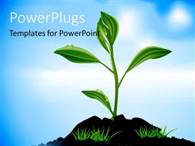 Theme having a beautiful plant with bluish background