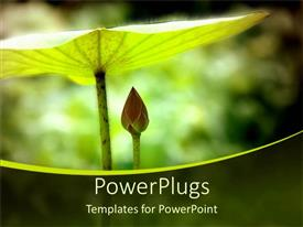 Elegant PPT layouts enhanced with a beautiful plant shielding the other plant with a blurred background
