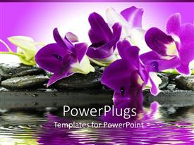Slide deck featuring beautiful  purple and white orchids on rocks by a pond with purple background orchid scent