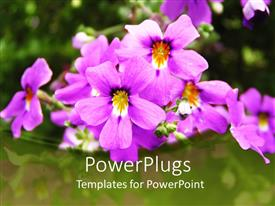 Beautiful slide deck with beautiful purple and yellow flowers with blurry green background