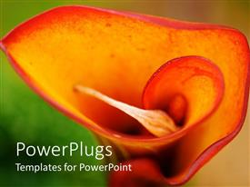 Elegant PPT layouts enhanced with a beautiful rose with blurred background