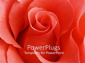 PPT theme having a beautiful rose with place for text in the middle