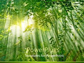 PPT theme enhanced with a beautiful scenery including sunlight in a forest and its effect